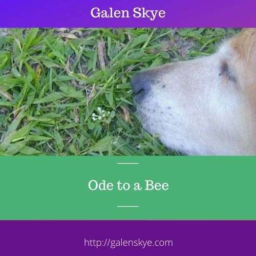 Ode to a Bee and a Lament to Callie- Galen Skye