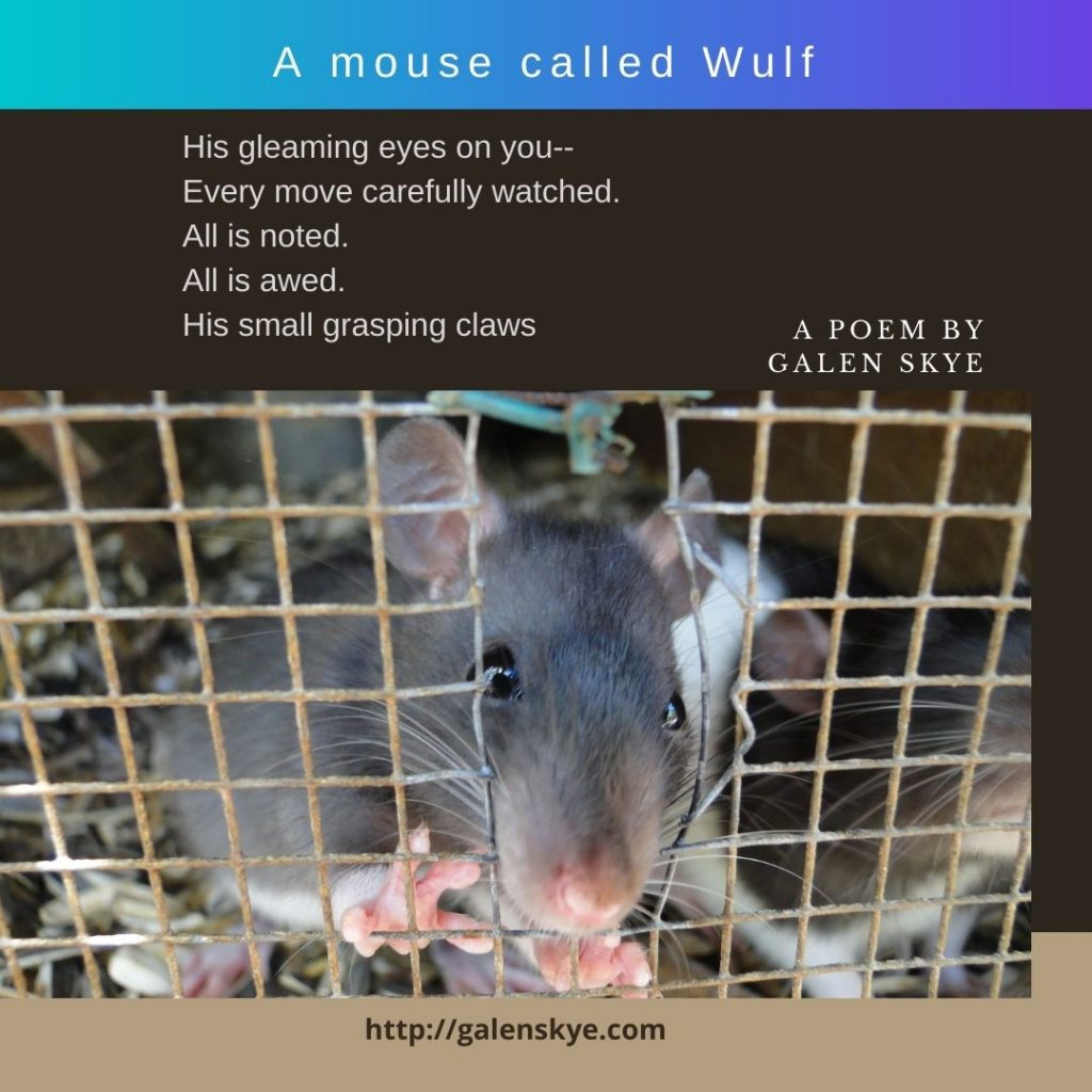 Poem - A mouse called Wulf - by Galen Skye
